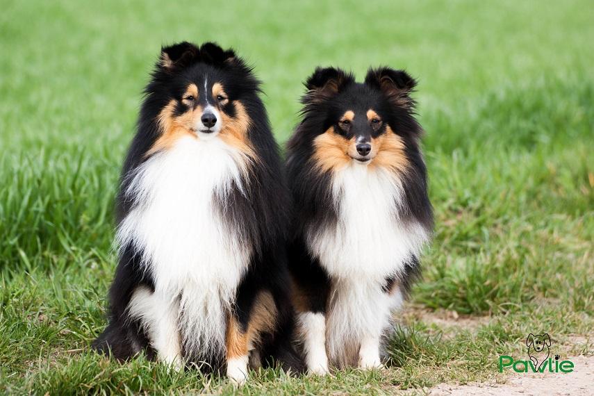 Pawtie - Diego und Josie