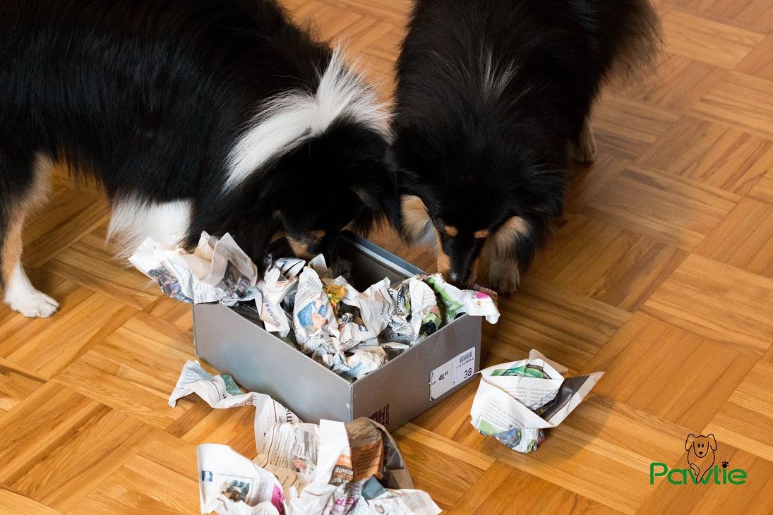 Hunde Intelligenzspielzeug Schnüffelbox
