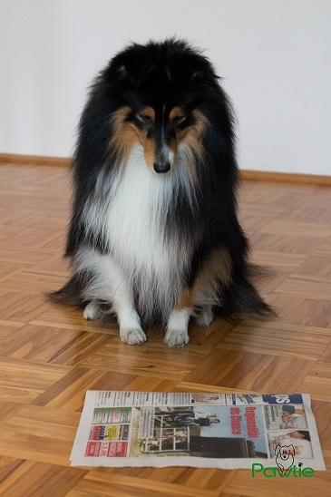 Intelligenzspiele mit Zeitung