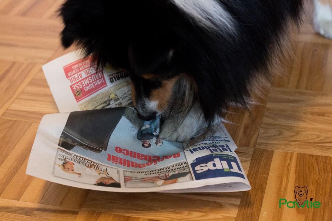 Leckerli aus Zeitung auspacken