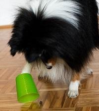 Hunde Intelligenzspielzeug - Becher Test