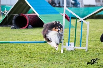 Hundetraining - Agility